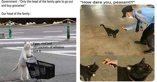 """cats caturday funny memes lol animals 