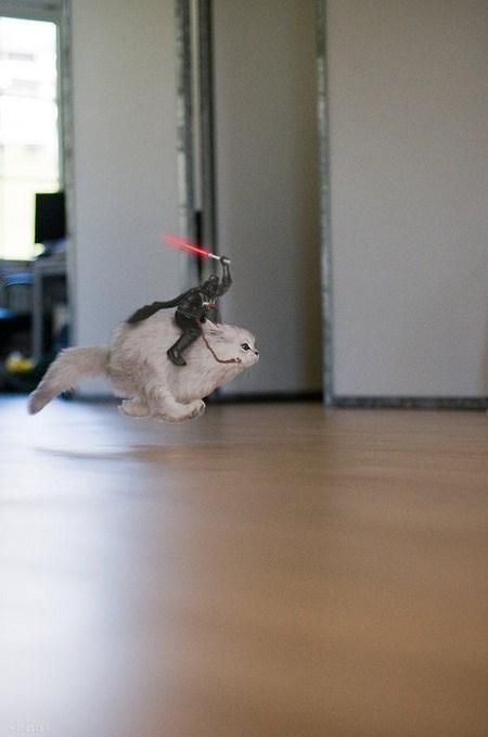 star wars cats memes funny cute lol cat animals