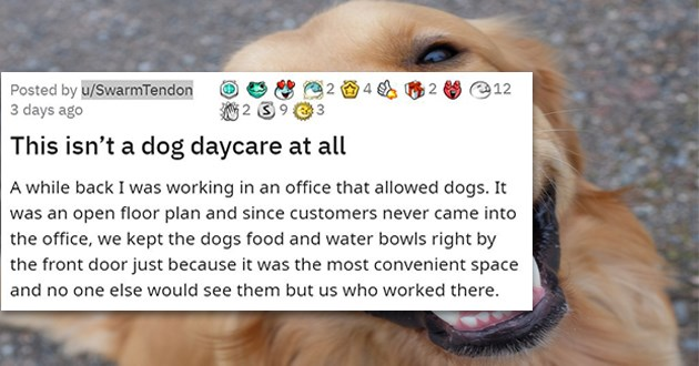 doggy dogcare funny wholesome dogs lol doggo aww