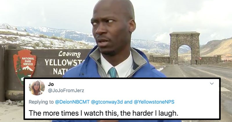 A reporter dips out when a herd of bison show up during a broadcast | Jo @JoJoFromJerz Replying DeionNBCMT @gtconway3d and @YellowstoneNPS more times watch this harder laugh | news reporter looking off camera to the side in disbelief