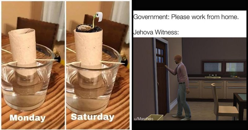 Funny memes about being quarantined | Monday Saturday growing toilet paper seeds in water | Government: Please work home. Jehova Witness: u/Mareheis man knocking on a door from inside the house