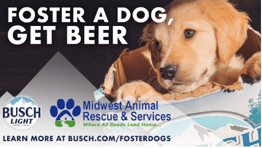 beer dogs foster quarantine - 11004933