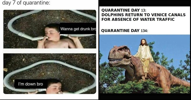 Funny dank memes about the weird things people have started doing during quarantine | day 7 quarantine: Wanna get drunk bro down boy speaking and listening to the same tube | QUARANTINE DAY 13: DOLPHINS RETURN VENICE CANALS ABSENCE WATER TRAFFIC QUARANTINE DAY 134: Jesus riding a dinosaur