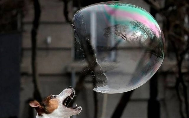 Amazing animal photos | pics taken at the right moment perfectly timed photos dog biting a huge soap bubble halfway bursting popping
