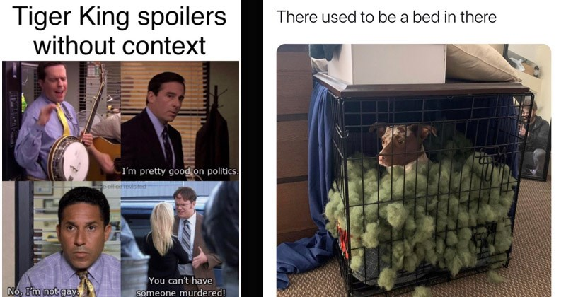 Funny random memes | The Office Tiger King spoilers without context pretty good on politics. office revisited can't have No not gay. someone murdered! | dog in a cage filled with mattress filling There used be bed there