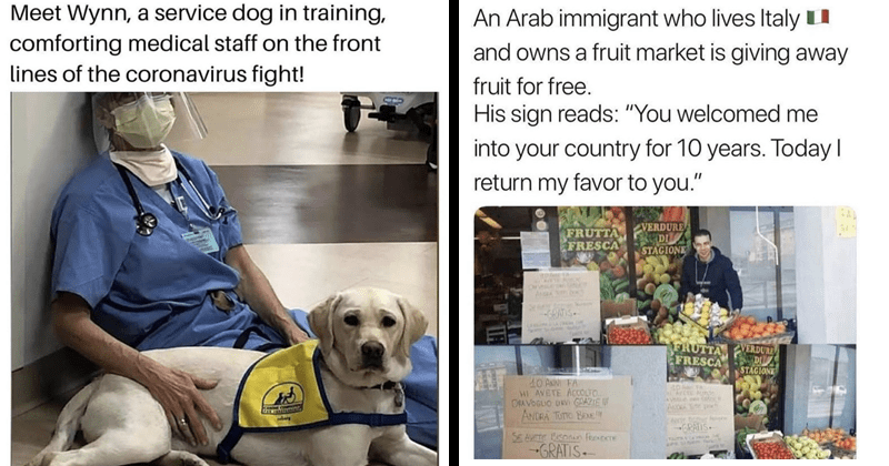 Wholesome tweets, coronavirus, feel-good, covid-19 | Meet Wynn service dog training, comforting medical staff on front lines coronavirus fight! | An Arab immigrant who lives Italyu and owns fruit market is giving away fruit free. His sign reads welcomed into country 10 years. Today return my favor CAL FRUTTA FRESCA