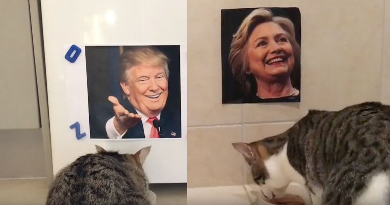 blind,election,Cats,politics