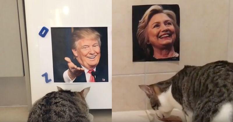 blind election Cats politics - 1103365