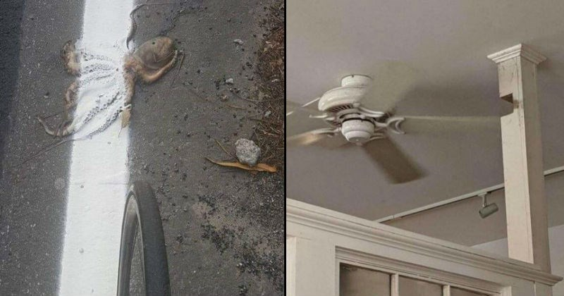Improperly installed things and badly done jobs | painting white road markings over a dead squid lying on the ground | pillar with a piece carved out of it to allow a ceiling fan to rotate through it
