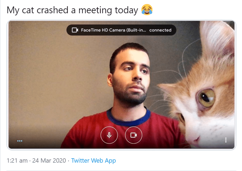 Pets Who Aren't Making This WFH Thing Any Easier | tweet by Hamza @oihamza My cat crashed meeting today FaceTime HD Camera Built connected 1:21 am 24 Mar 2020 Twitter Web App 18 Retweets 472 Likes