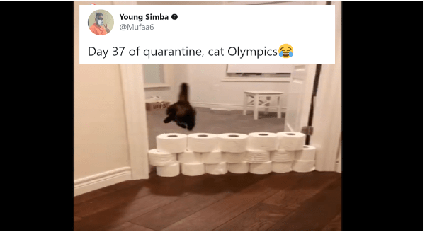 Pets Entertaining Their Humans During These Days At Home | tweet by mufaa6 day 37 of quarantine cat Olympics video of a cat jumping over rows of toilet paper rolls in a pile
