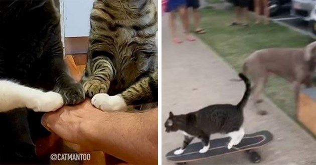 cats instagram training awesome skateboard stunts cool | three cats placing their paws on one person's hand as if they're holding hands in a circle | grey cat with white feet skateboarding as people watch