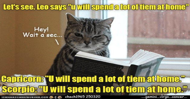 "lolcats funny cat memes cats lol cute aww animals | Let's see. Leo says ""uwill spend alotof tiem at home"" Hey! Wait sec Capricorne ""U will spend lot tiem a thome Scorpio U will spend lot tiem at home ICANHASCHEEZBURGER.OOM chech1965 250320 gemini.virgo.concer. cat reading from a book"
