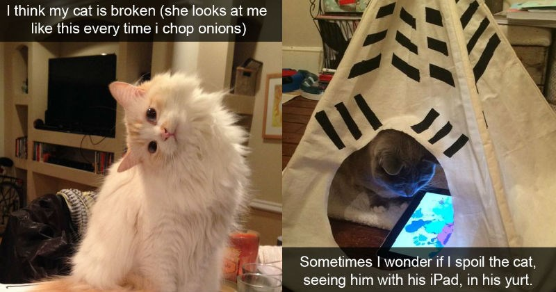 Collection of very funny cats on Instagram and Snapchat - cover graphic of an Instagram cat snapchat in a yule tent with his ipad, relaxing.