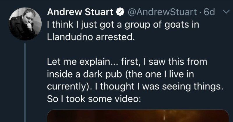 Guy's Twitter thread is about goats taking over a town | Andrew Stuart O @AndrewStuart 6d v think just got group goats Llandudno arrested. Let explain first saw this inside dark pub one live currently thought seeing things. So took some video: