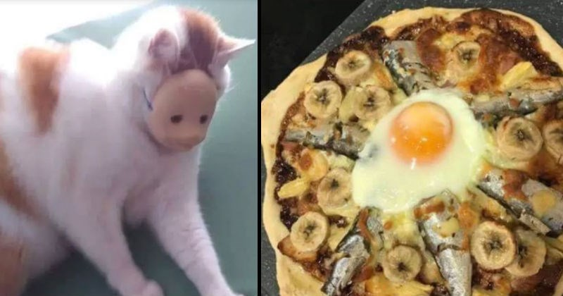 Weird and wtf cursed images that feel uncomfortable | cat wearing a baby doll's face mask over its head | sunny side up egg surrounded by sardines and banana slices arranged in a circle