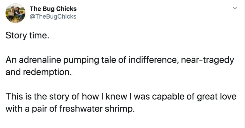 Twitter thread about freshwater shrimp is full of love   Bug Chicks @TheBugChicks Story time. An adrenaline pumping tale indifference, near-tragedy and redemption. This is story knew capable great love with pair freshwater shrimp thread