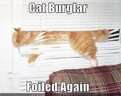 Cheezburger Image 1106818304