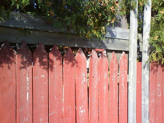 Cats hiding in photos | wooden fence painted red and a tiny cat face peeking from between two pickets at the top