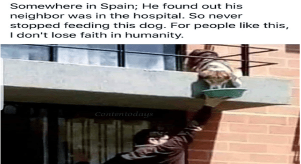 Wholesome animal memes | Somewhere Spain; He found out his neighbor hospital. So never stopped feeding this dog people like this don't lose faith humanity. Contentodays man standing on railing to feed a dog on a balcony overhead