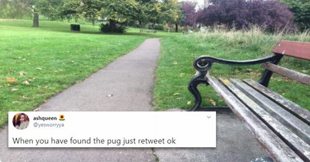 pug tweets funny hidden animals dogs lol twitter aww cute | ashqueen @yesworryya have found pug just retweet ok photo of a park and the face of a pug dog sticking out from behind a bench