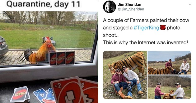 wholesome animals uplifting funny cute lol aww | Quarantine, day 11 UN ONG UNO +2 UNO playing uno against a chicken through a window | Jim Sheridan Jim_Sheridan couple Farmers painted their cow and staged TigerKingphoto shoot This is why Internet invented!