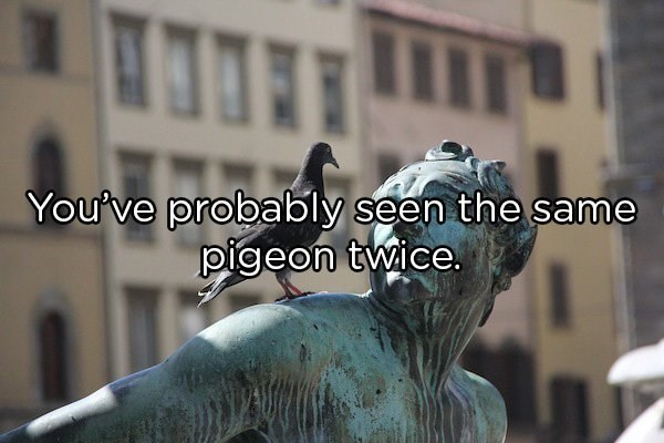 Shower thoughts about animals | probably seen same pigeon twice. a pigeon sitting on the shoulder of a statue