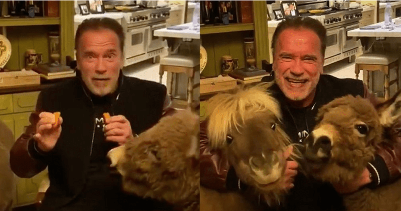 Arnold Schwarzenegger Tweets Funny Isolation Stories With His Mini Horse And Donkey