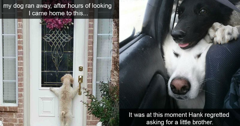 Funny pictures of Snapchat dogs that have no clue how hilarious they are.