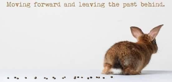 Funny bunny memes | Moving forward and leaving past behind. cute bunny walking away leaving a trail of droppings behind it