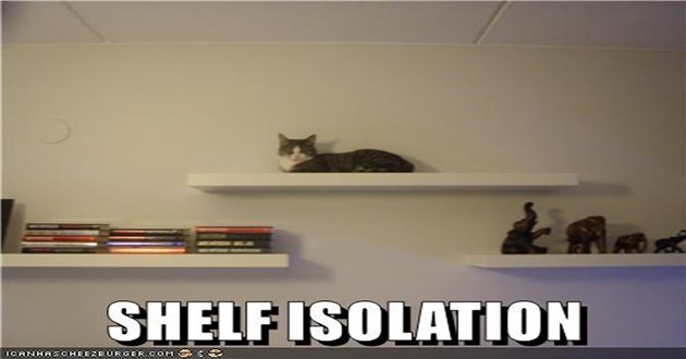 lolcats cat memes funny cats lol aww cute animals | SHELF ISOLATION ICANHASCHEEZEURGER.COM GE cat sitting on the top shelf by itself