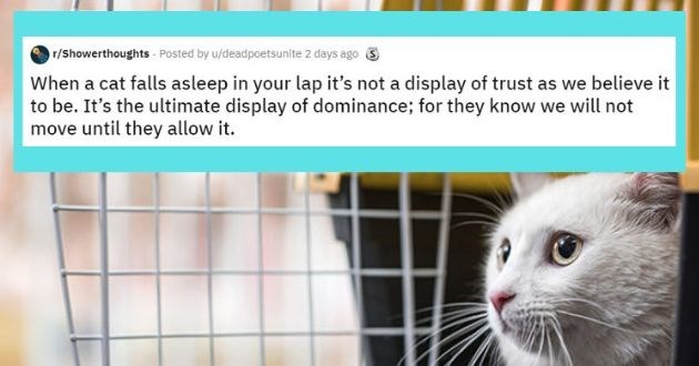 shower thoughts reddit top rated animal askreddit best of week thoughts animals pets | r/Showerthoughts Posted by u/deadpoetsunite 2 days ago S cat falls asleep lap 's not display trust as believe be s ultimate display dominance they know will not move until they allow .