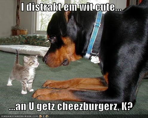 Cheezburger Image 1112125184