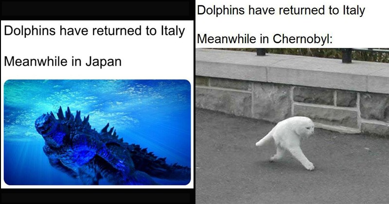Funny dank memes about dolphins returning to Italy | Dolphins have returned Italy Meanwhile Japan Godzilla | Dolphins have returned Italy Meanwhile Chernobyl: half cat walking