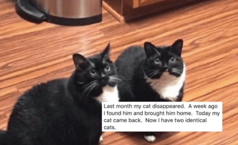 funny lost cat | posted by Stanislav Zak Purrtacular Last month my cat disappeared. A week ago I found him and brought him home. Today my cat came back. Now I have two identical cats.