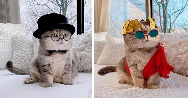 cat instagram costumes cute cats aww outfits fashion style pics | adorable fluffy cat in a top hat and a monocle, cat with a red toga and wearing a gold leaf crown