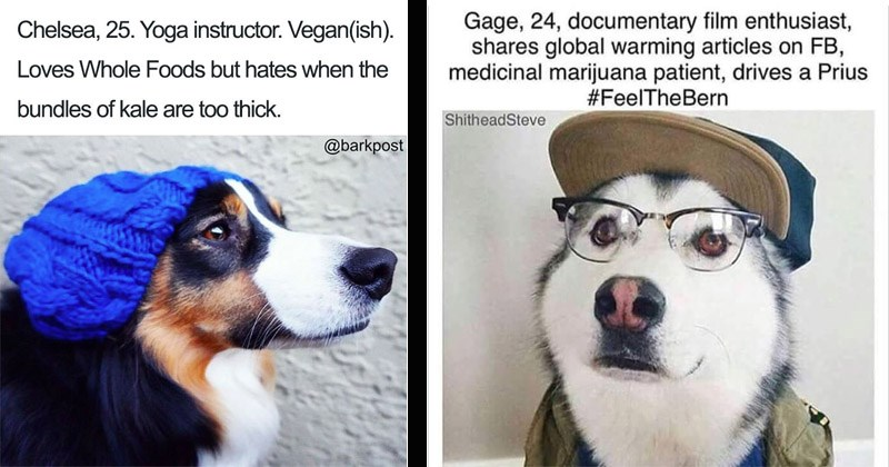 Funny and cute photos of dogs representing different types of people on Tinder | Chelsea, 25. Yoga instructor. Veganish Loves Whole Foods but hates bundles kale are too thick barkpost | Gage, 24, documentary film enthusiast, shares global warming articles on FB, medicinal marijuana patient, drives Prius #FeelTheBern ShitheadSteve