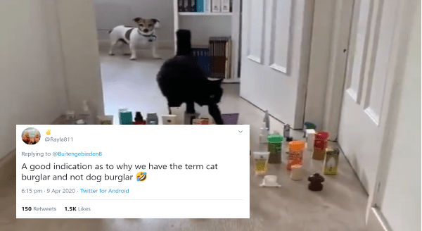 The Difference Between a Cat And a Dog Perfectly Demonstrated In One Obstacle Challenge | Rayla811 Replying BuitengebiedenB good indication as why have term cat burglar and not dog burglar cat and dog walking along a corridor filled with objects on the floor