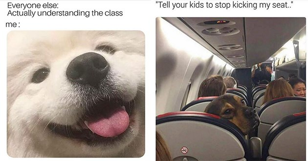 funny doggo dogs memes lol animals | Everyone else: Actually understanding class : cute white dog with its tongue sticking out | Tell kids stop kicking my seat. dog looking behind its seat on a plane