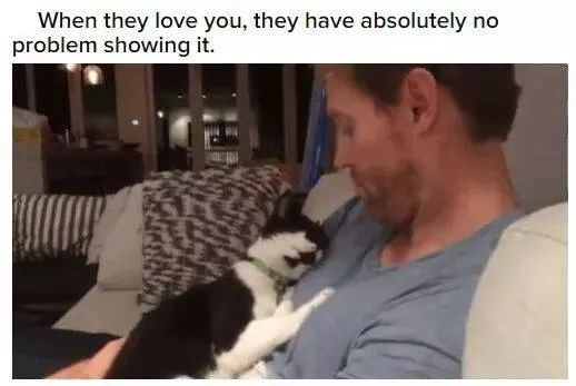 kitty love cats aww animals cute happiness trust pets | they love they have absolutely no problem showing black and white cat snuggled against a person's chest