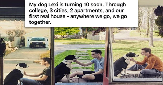 wholesome cats dogs aww love cute animals pets | My dog Lexi is turning 10 soon. Through college, 3 cities, 2 apartments, and our first real house anywhere go go together. Aww three photos of a guy petting a dog in a window frame