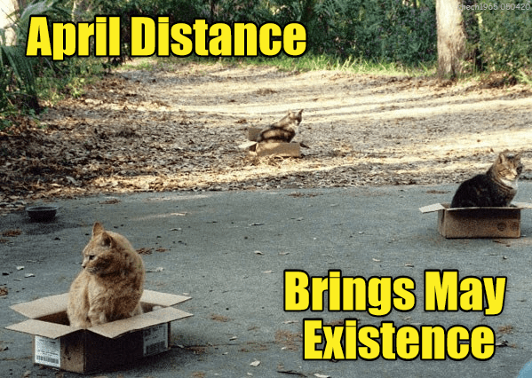 lolcats funny cat memes cats animals lol aww cute | April Distance Brings May Existence three cats sitting in cardboard boxes several feet away from each other