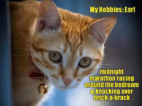 cats hobbies funny cute lol aww animals | My Hobbies: Earl midnight marathon racing around bedroom knocking over brick--brack orange cat with a bell tied around its neck
