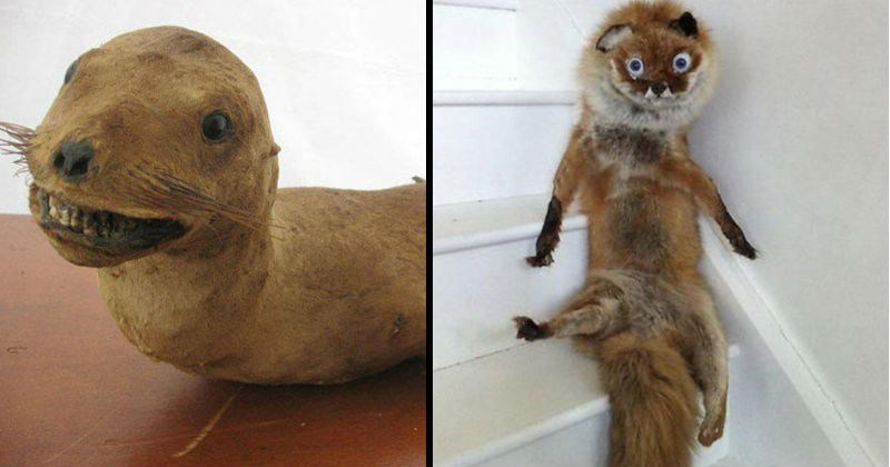 Bad gross and weird looking taxidermy fails | creepy cursed seal grinning with its teeth showing | fox in a weird sitting position with its fur sticking out