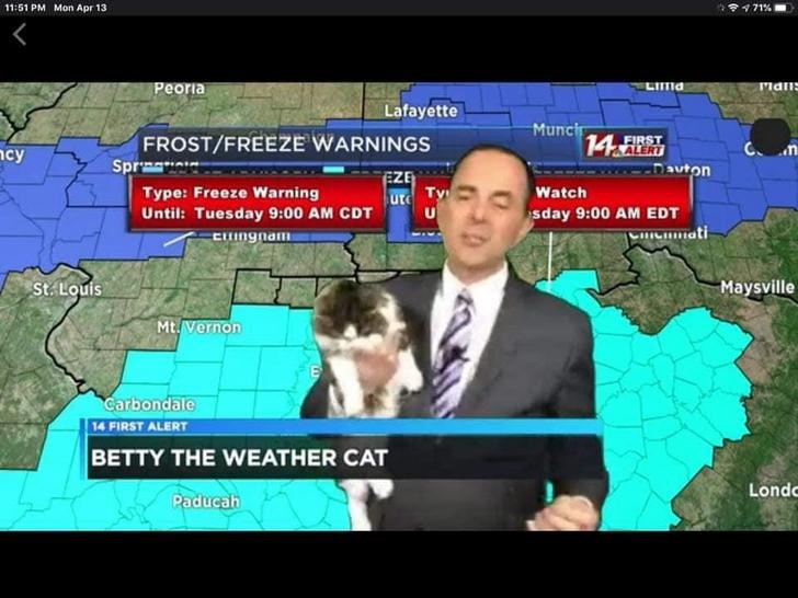 news cat weatherman betty lol funny cute aww | weather report man cuddling cat during broadcast | 11:51 PM Mon Apr 13 9 71% Peoria LIma rian Lafayette FROST/FREEZE WARNINGS Sprma Muncir 14 ALERT FIRST EZE Dauton Type: Freeze Warning Until: Tuesday 9:00 AM CDT Watch ute sday 9:00 AM EDT cmati Cngnam St. Louis Maysville Mt. Vernon Carbondale 14 FIRST ALERT BETTY WEATHER CAT Londc Paducah