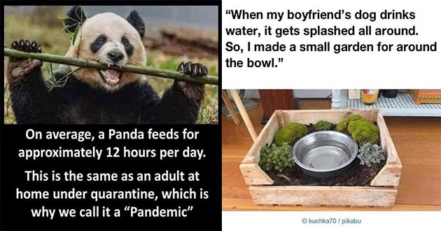 wholesome funny cats dogs tweets animals aww cute lol | On average Panda feeds approximately 12 hours per day. This is same as an adult at home under quarantine, which is why call Pandemic | my boyfriend's dog drinks water gets splashed all around. So made small garden around bowl kuchka70 pikabu