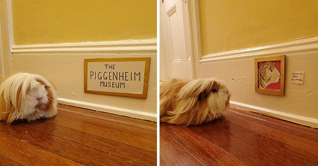gerbil art museum cute lol funny paintings piggenheim aww animals | very furry guinea pig visiting a miniature art gallery looking at tiny paintings rodent versions of famous artworks