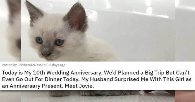 cats dogs adopted rescue aww adopted adoption cute love shelter | Today is My 10th Wedding Anniversary. We'd Planned a Big Trip But Can't Even Go Out For Dinner Today. My Husband Surprised Me With This Girl as an Anniversary Present. Meet Jovie adorable white kitten with grey ears