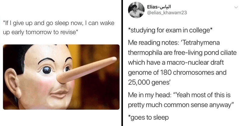 "Funny memes about studying, studying memes, college memes, university memes | Pinocchio ""If give up and go sleep now can wake up early tomorrow revise"" 