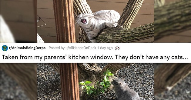 derpy cats dogs lol funny aww cute reddit animals | grey cat hanging from a tree branch r/AnimatsBeingDerps Posted by AllHanceOnDeck Taken from my parents' kitchen window. They don't have any cats...